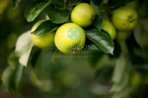 fruit picking Norwich