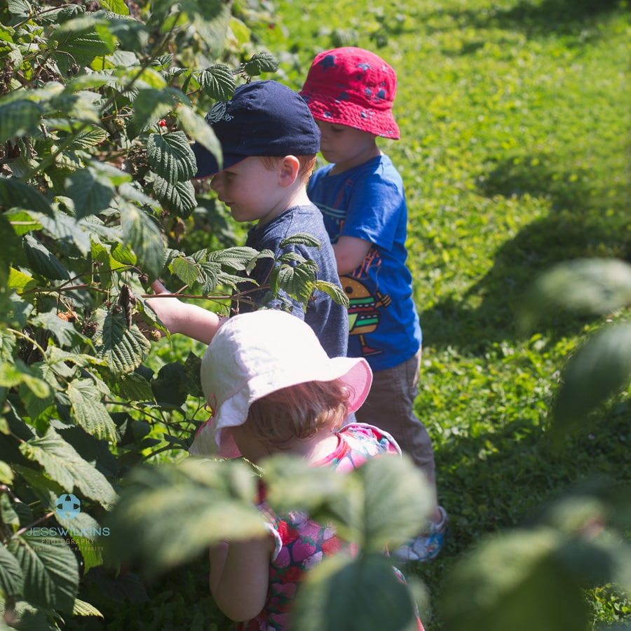 fruit picking  3 children