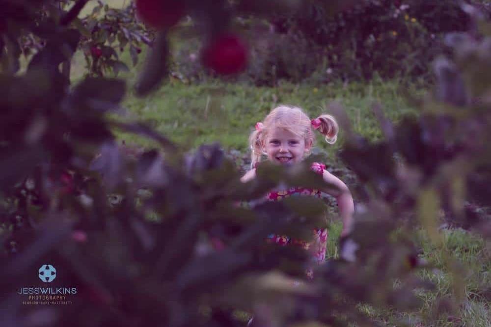 Fruit picking in Norwich