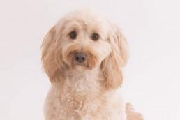 cute dog portrait